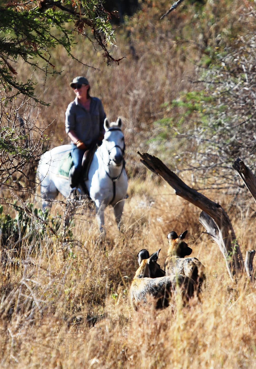 Charlotte, riding a horse through the trees, is our team Horse Manager