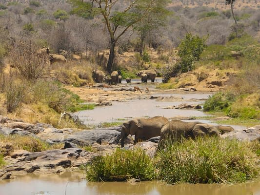 watrehole with 2 elephants drinking in the foreground and the rest of the herd in the background