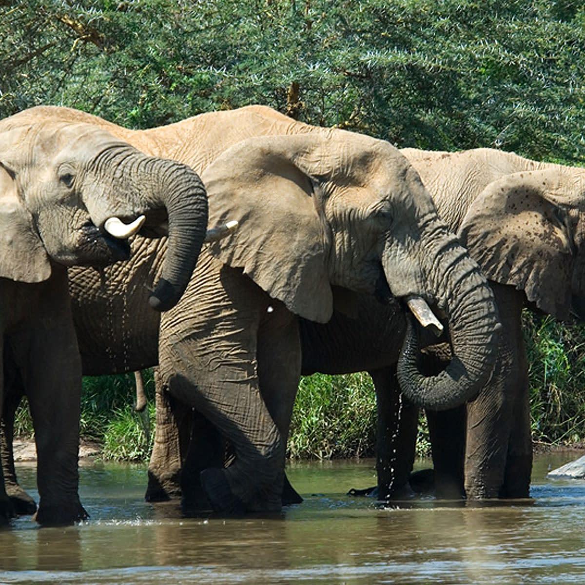 3 elephants drinking from the waterhole
